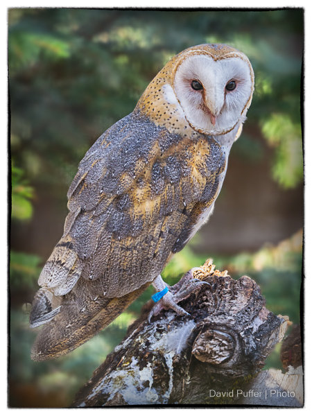 Liz loved barn owls, she would stand and watch them for hours. I think this guy posed just for me.
